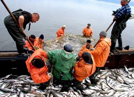 Рыболовный кластер приморье